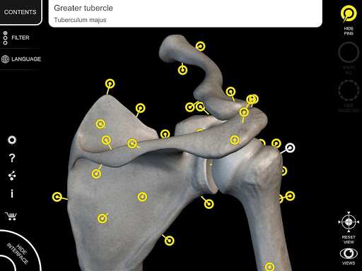 Skeleton   3D Anatomy 2.5.3 Screenshots 9