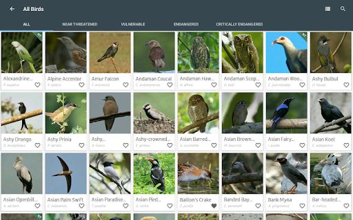 Indian Birds android2mod screenshots 12