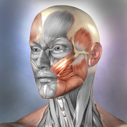 Muscle and Bone Anatomy 3D  Icon