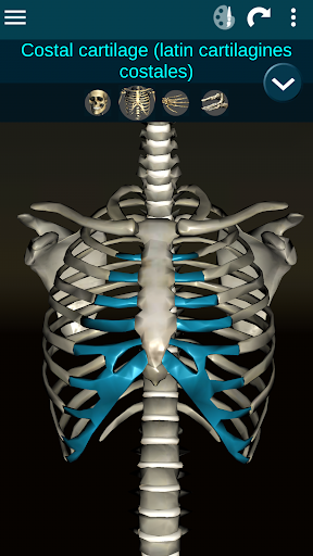 Osseous System in 3D (Anatomy) 2.0.3 Screenshots 6