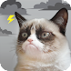 Grumpy Cat Weather - Androidアプリ