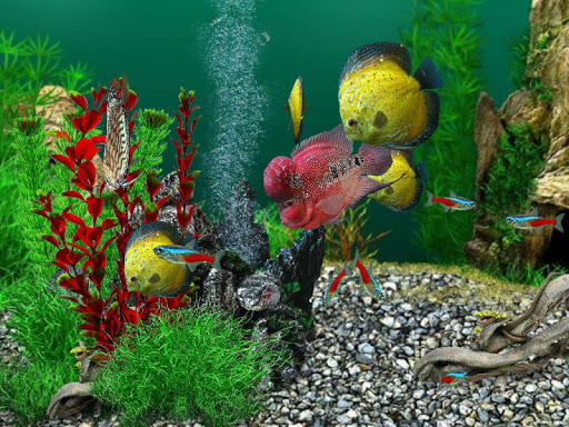 AquaLife 3D filehippodl screenshot 12