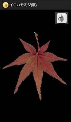 シンプル紅葉図鑑のおすすめ画像3