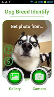 Dog Breed Auto Identify Photo