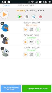 Song Sleuth: Auto Bird Song ID w/ David Sibley 1