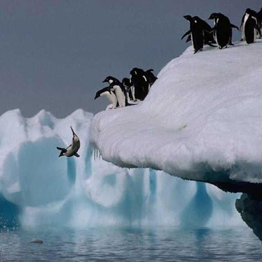 Penguins Jigsaw Puzzles apkdebit screenshots 5