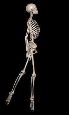 Anatomy for Artists: Balletのおすすめ画像4