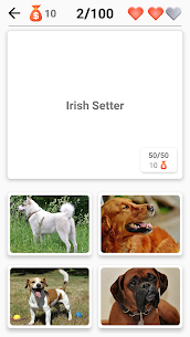 Dog Breeds – Quiz about all dogs of the world! 5