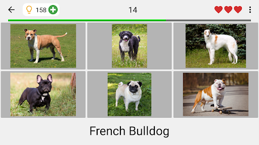 Dogs Quiz - Guess Popular Dog Breeds in the Photos  Screenshots 14
