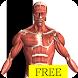 Visual Anatomy Free - Androidアプリ