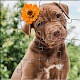 Jigsaw Puzzles - Free Puzzle Games 5000+ pictures para PC Windows