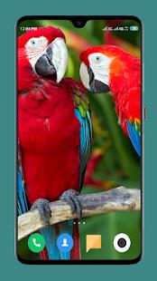 Parrot Wallpapers 4K
