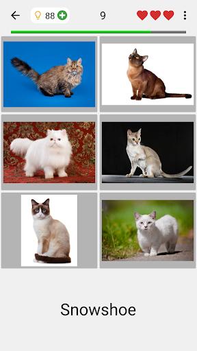 Cats Quiz - Guess Photos of All Popular Cat Breeds 3.1.0 screenshots 2