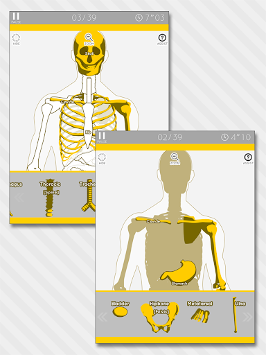 Enjoy Learning Anatomy puzzle 3.2.3 screenshots 7
