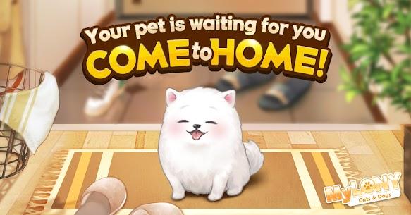 MyLONY: Cats & Dogs 8