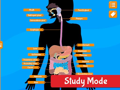 Anatomix - Human Anatomy screenshots 11