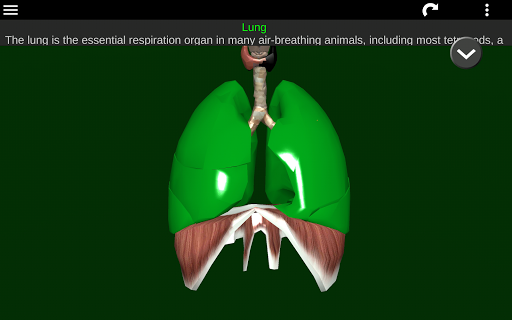 Internal Organs in 3D (Anatomy) 2.5 Screenshots 14