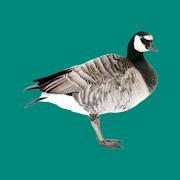 Progressive Goose Decoy