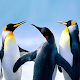The Penguin para PC Windows