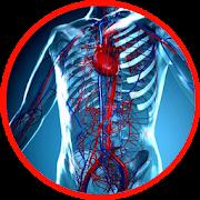 Anatomy - Physiology
