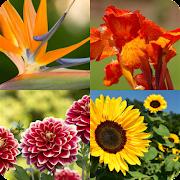 Flores: que tanto sabes de flores hermosas