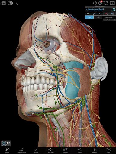 Human Anatomy Atlas 2019 for Springer 2019.1.40p Screenshots 2