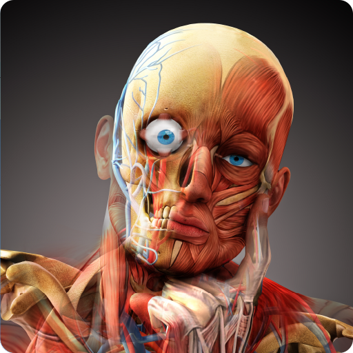 Baixar 3D Human Anatomy Atlas Physiology: Internal Organs para Android