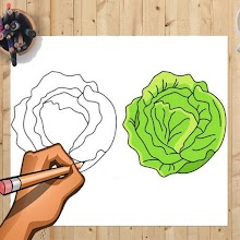 How to Draw Cabbage And Other Vegetables APK