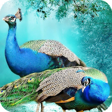 Peacock Wallpaper 4K Latest Download on Windows