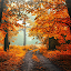🍁 Autumn Wallpaper 🍂