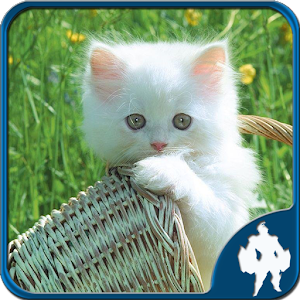 Cats Jigsaw Puzzles