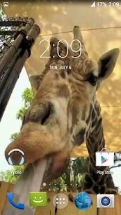 Giraffe HD. Live Wallpaper