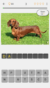 Dogs Quiz – Guess Popular Dog Breeds in the Photos 2
