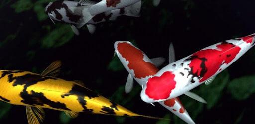 Magic Touch Koi Fish Aplikasi Di Google Play