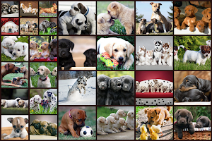 Dogs Jigsaw Puzzles Game - For Kids & Adults
