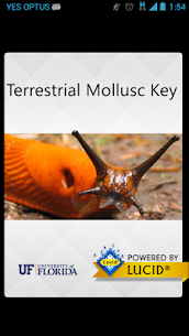 Terrestrial Mollusc Key  For Pc – Free Download In Windows 7, 8, 10 And Mac 1