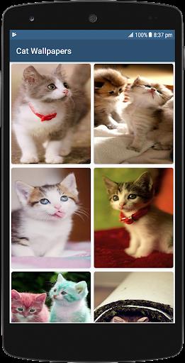 Cute Cat HD Wallpapers screenshots 2