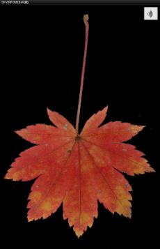 シンプル紅葉図鑑のおすすめ画像5