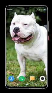 Pitbull Dog Wallpaper HD 2