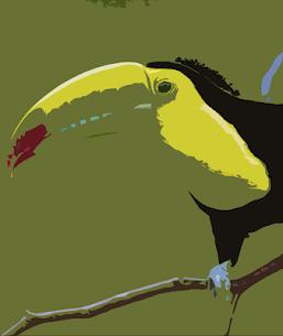Toucan bird sounds ~ For Pc – Windows 10/8/7/mac -free Download 1