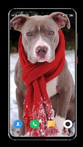Pitbull Dog Wallpaper HD 3