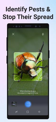 Picture Insect - Bug Identifier apktram screenshots 4
