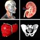Anatomy Quiz Pro - Androidアプリ