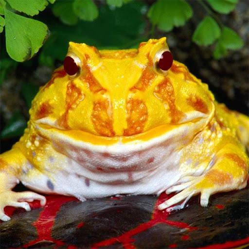 Frogs Jigsaw Puzzles  screenshots 6