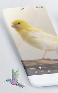 Suara Pikat Burung Kecil Lengkap Google Play À¦¤ À¦… À¦¯ À¦ª