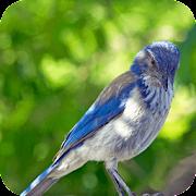 Relax & Sleep with Bird Sounds