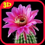 Cactus. Video Wallpaper