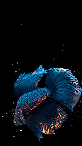 Betta Fish Live Wallpaper FREE screen 1