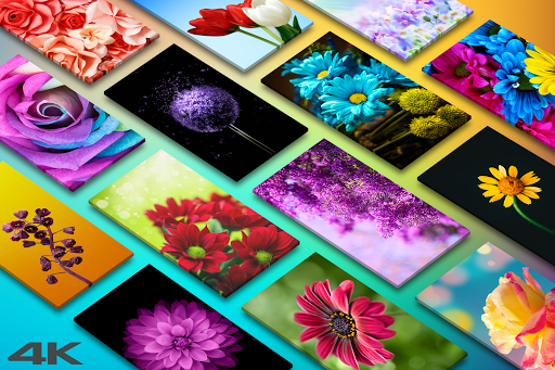 ud83cudf3a Flower Wallpapers - Colorful Flowers in HD & 4K 3.0.23 screenshots 1