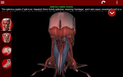 Muscular System 3D (anatomy) 2.0.8 Screenshots 14